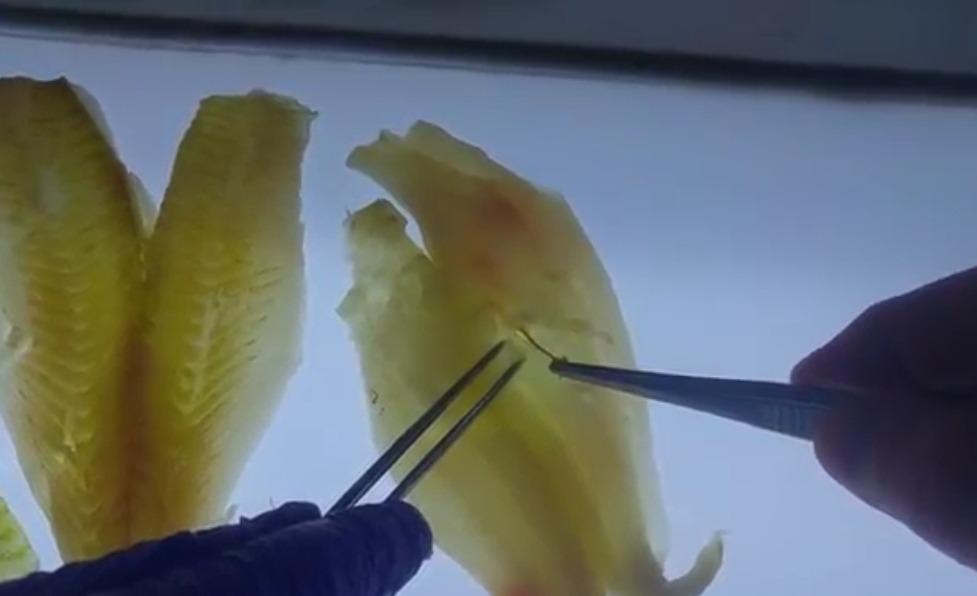 כשרות דגים